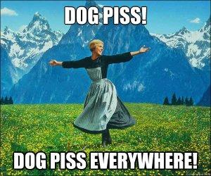 dog piss
